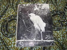 Charles VAUCHER: Oiseaux du marais. édition numérotée