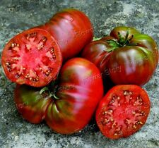 First Class50Black Sea Man Tomato Seeds Easy to Plant Gardening Vegetable