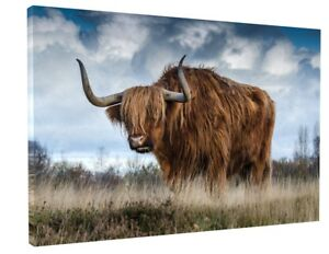 HIGHLAND COW/BULL CANVAS PICTURE PRINT WALL ART CHUNKY FRAME LARGE 1086-2