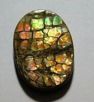 12.85 Cts Natural Polished Ammolite Cabochon Loose Gemstone 23.6X14X4.3 mm SW101-20