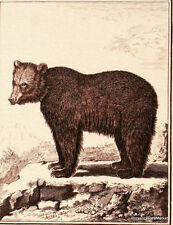 L OURS DES PYRENEES    FRANCE Document Philatélique Officiel  3091
