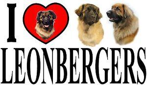 I LOVE LEONBERGERS Car Sticker By Starprint - Featuring the Leonberger