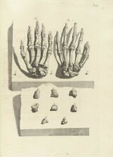 Bones of the Hand, De Humani Corporis, 1685, Govert Bidloo, Anatomy Poster