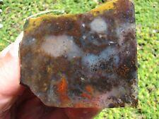 New listing Ochoco Agate Unpolished Slab: Unusual Colors w/ Mix of Moss, Dots & Small Plume