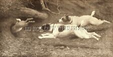 Antique Repro Photo Print 2 Jack Russell Terriers Chasing A Rabbit