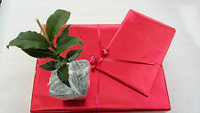 BIRTHDAY GIFT BAY LAUREL Laurus nobilis- evergreen tree plant aromatic leaves