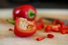 CHILI PEPPER SATAN KISS – 50 SEEDS  ORGANIC / NON GMO