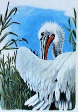 PELLICANO DI ROMANIA WWF Uccelli UCCELLO BUSTA Primo Giorno 1° FDC 3235