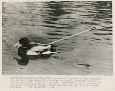 USA, Nevada, chasse au canard  Vintage silver print  Tirage argentique  18
