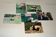 BAO BAO The Panda Bear Cub  #11