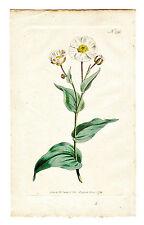 Prints Antique Botanical W. Curtis Vintage English Lot of 3 1793-95 Flowers