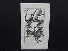 Buffon's Natural History, 1792 Monkeys, #2 Coatia, Marikina, Pinch, Ai
