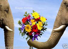 Fleurs coupées Mix - 2000 graines snapdragon ZINNIA Larkspur tournesol ASTER Marigold