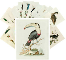 24 Postkarten Set * Amazing Birds George Edwards Retro Illustrations CC1032