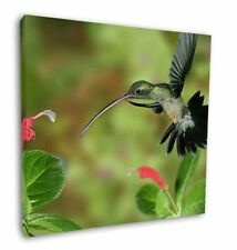 More details for green hermit humming bird 12