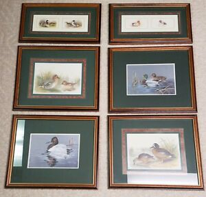 PROFESSIONALLY FRAMED AND MATTED DUCK PRINTS