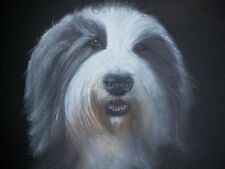 Bearded Collie pet portrait