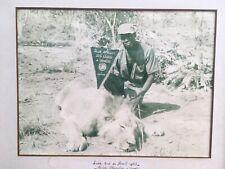 Originale Grande Et Belle Photo Chasse Lion Du Club Africain Des Lion À Criniere