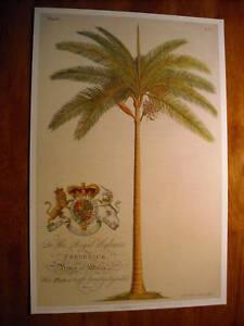 BOTANICAL PALM PRINTS FROM GEORG DIONYSIUS EHRET GDE04