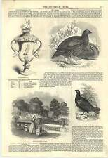 1846 Damp Buckingham Palace Fitzhardinge Cup Grouse Black Cock Col Thornton