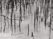 1928 Vintage LANDSCAPE REED WETLANDS Germany Photo Art By ALBERT RENGER-PATZSCH