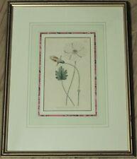 Framed Botanical Engraving By Curtis, ca 1797 - Plate 385, Broad-Leaved Monsonia
