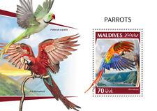 Maldives 2018 parrots  fauna   S201810