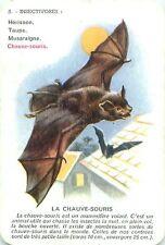 CHAUVE SOURIS Fledertiere Bat  PLAYING CARD CARTE A JOUER OLD ANCIEN