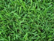 Centipede Grass Seed for Lawn Turf 1 Pound!
