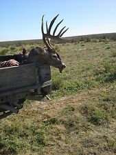 coahuila mexico deer lease