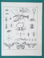 BUTTERFLIES Moths Insects Cockroach Bee Beetle Crayfish - 1828 Antique Print