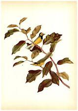 Hooded Warbler Print by Athos  Menaboni - Book Plate - Vintage Wall Hanging