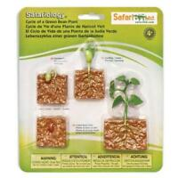 Life Cycle Of A Green Bean Plant, model ~ Safari Ltd 662416 Safariology
