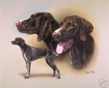 Robert J. May Multi Study - German Shorthaired Pointer