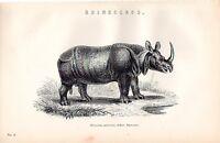 1880 Aufdruck ~Natural World~ Indisch Nashorn ~ Nashorn Unicoris