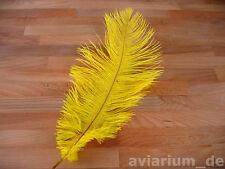 Schöne Straußenfeder Straußenfedern Federn 2 Stk. 30-35 cm gelb