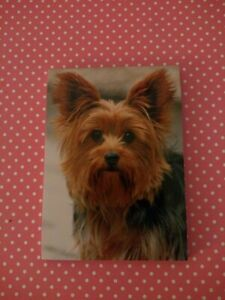 Yorkshire Terrier Note Pad