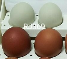 1 Pure Swedish Emerald Hen Fertile Hatching Egg Exotic Rare Chicken Green Eggs