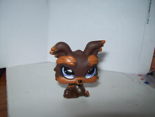 Littlest Pet Shop~#509~Yorkie Puppy Dog Chocolate Carmel~Glass Purple Clover Eye