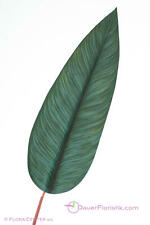 Stromanthe Blatt 14x41cm 83 cm Exot grün künstlich naturgetreu Strelitzie