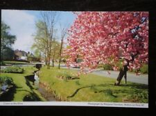 POSTCARD B37-5 DERBYSHIRE COTON-IN-THE-ELMS GREAT VIEW ALONG ROAD / STREAM