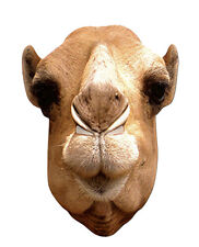 Camel Animal 2D Card Party Face Mask Fancy Dress Up Zoo Theme
