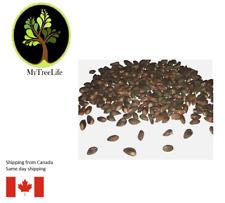 30 seeds of juniper bonsai tree