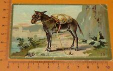 CHROMO BON-POINT IMAGE ECOLE Gaufré 1890-1910 ANIMAUX MULE