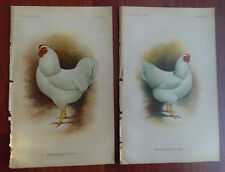 1901 2 Color Book Plate Drawings of White Wyandotte Chickens Male and Female