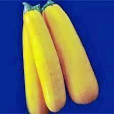 SQUASH SEED,GOLDEN ZUCCHINI SQUASH, HEIRLOOM, ORGANIC, 25+ SEEDS, NON GMO