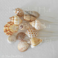 Seashell Bridal Bouquet Picks Beach Wedding Flower Arrangement Shell Inserts Sea