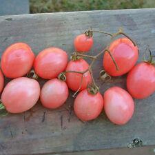 Tomate - Pearly Pink Cherry - 10+ Samen ROSA und ERTRAGREICH!
