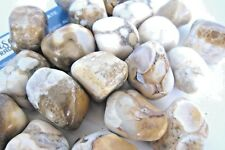 *ONE* Spotted Agate Tumbled Stone 25-30mm QTY1 Healing Crystal Info Card Focus