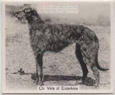SCOTTISH DEERHOUND AND BLOODHOUND MOURN MASTER ORIGINAL DOG PRINT PAGE FROM 1934